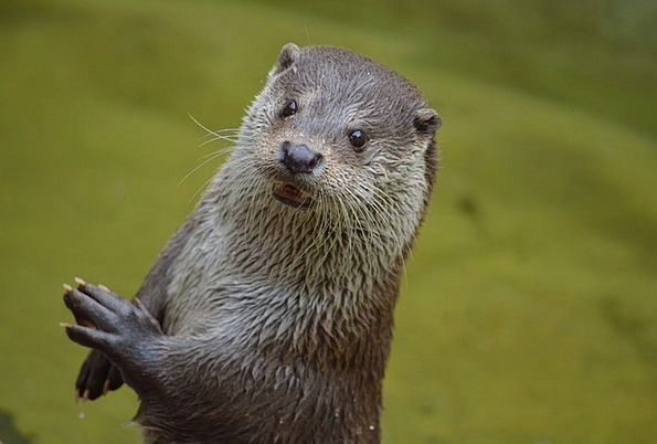 Otter Attractive Animal Physical Cute