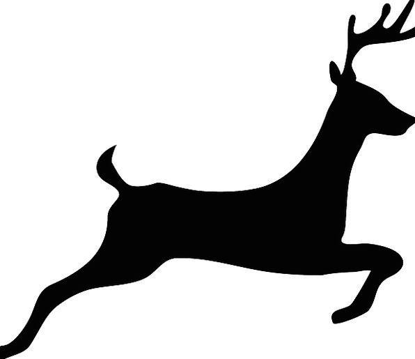 Deer Animal Physical Stag Hoofed Cervus Jump Free