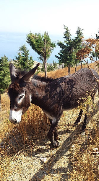 Donkey Last Animal Greece