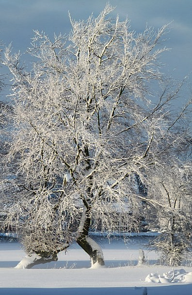 Winter Season Landscapes Snowflake Nature Wintry C