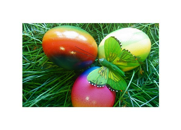 Easter Ovum Spring Coil Egg Meadow Butterfly Color
