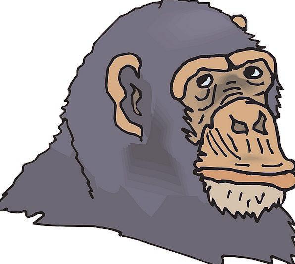 Head Skull Leaden Face Gray Animal Physical Chimp