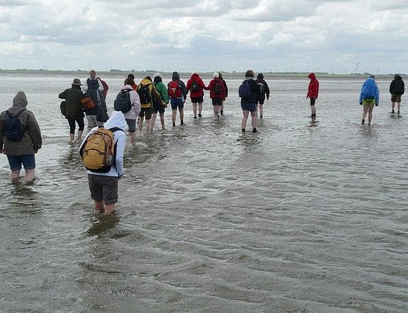 Mudflat Hiking Hike Trek Priel Water Wadden Sea Mu