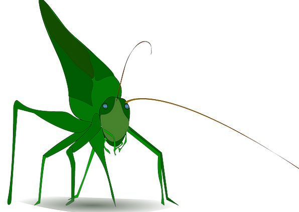 Grasshopper Green Lime Insect Free Vector Graphics