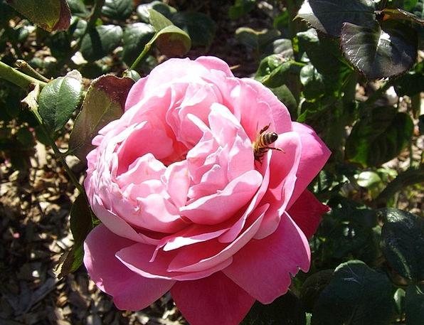 Spring Coil Fertilize Inseminate Bee Sexual Sensua