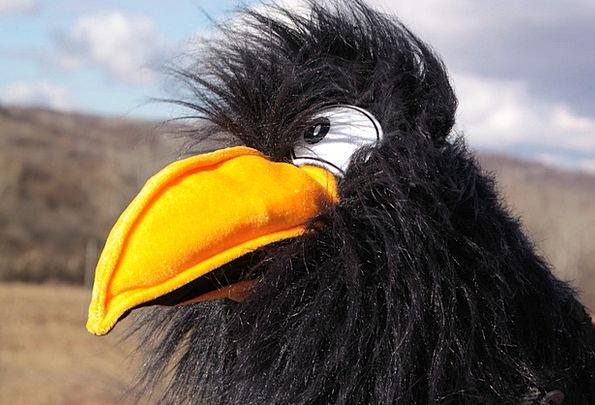 Black Dark Caw Games Sports Crow Plush Luxurious T