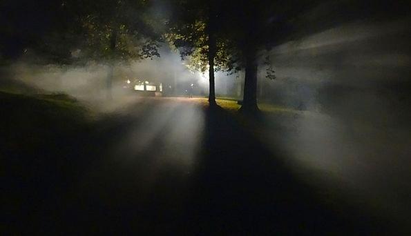 Forest Woodland Landscapes Mist Nature Dark Dim Fo