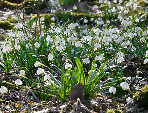 Snowflake Snow Landscapes Nature Flower Floret Spr