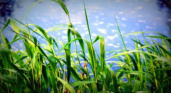 Grass Lawn Landscapes Blue Nature Clouds Vapors Sk