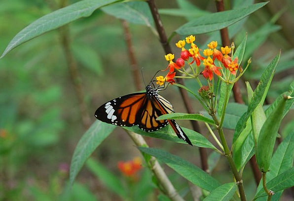 Garden Plot Insect Butterfly Colorful Wing Annex D
