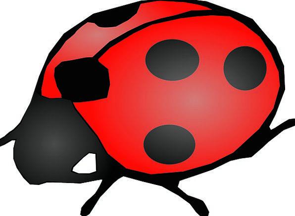 Ladybug Red Bloodshot Beetle Golden-Knop Black Dar