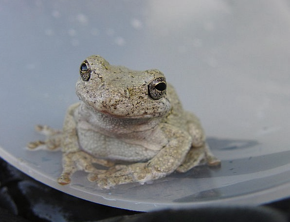 Toad Animal Physical Frog Happy Amphibian Fun Wild