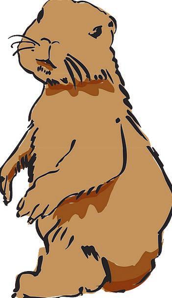Beaver Work Beaver Pelt Beaver Fur Rodent Gnawer G