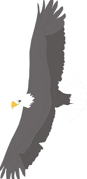 Spread Feast Bird Fowl Eagle Wings Annexes Bald So