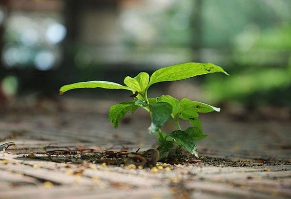 Green Lime Landscapes Vegetable Nature Tree Saplin