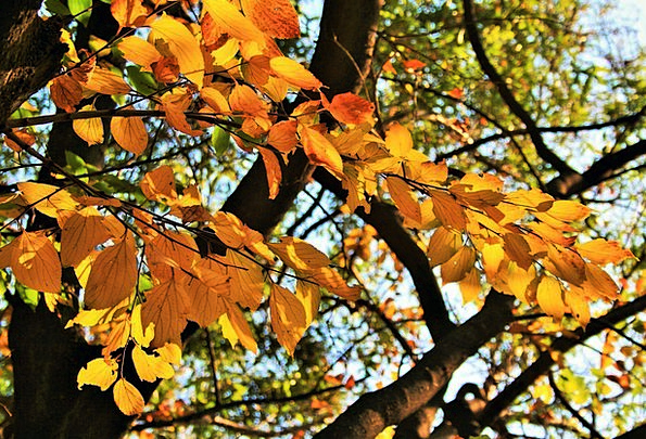 Autumn Fall Tree Sapling Branches Twigs Leaves Yel