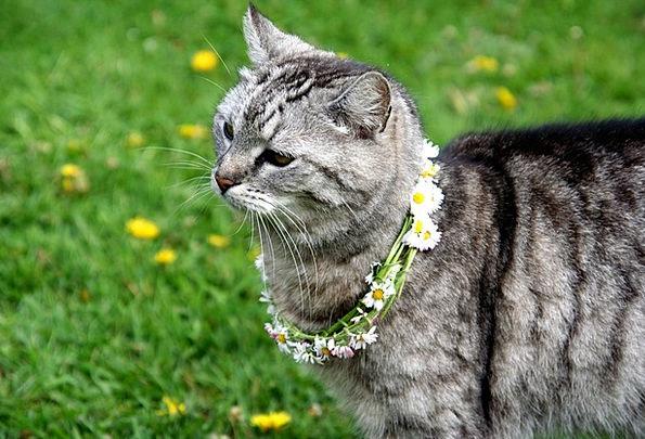 Cat Feline Physical Grass Lawn Animal Mieze