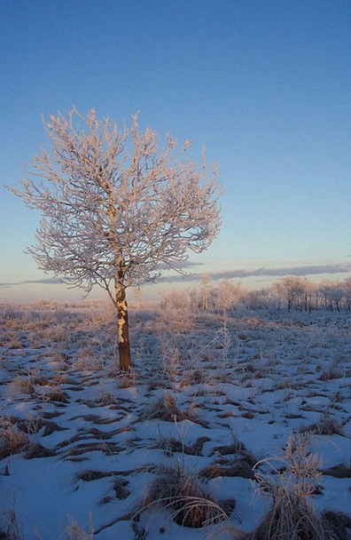 Frost Landscapes Reserved Nature Landscape Scenery