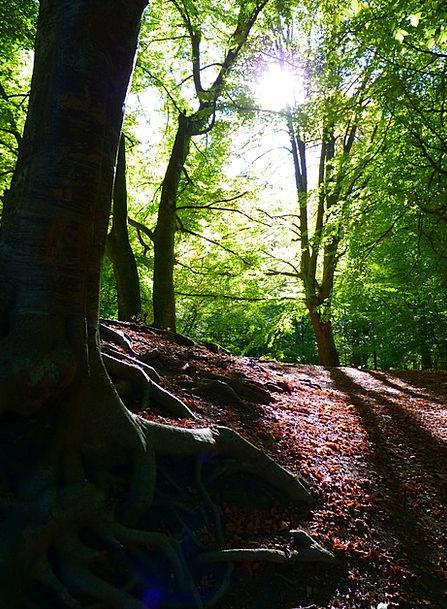Forest Woodland Landscapes Plants Nature Back Ligh
