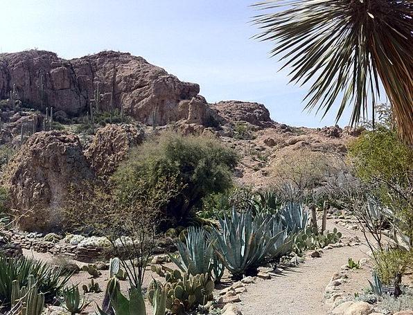 Cactus Landscapes Reward Nature Arizona Desert Cat