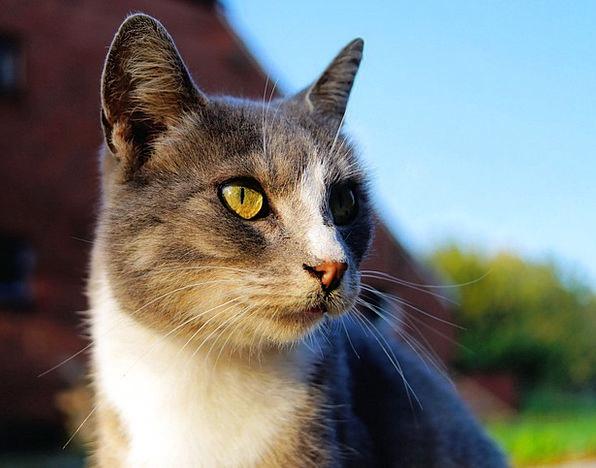 Cat Feline Feminine Head Skull Female Noble Portra