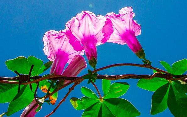 Flower Floret Landscapes Bright Nature Plant Veget