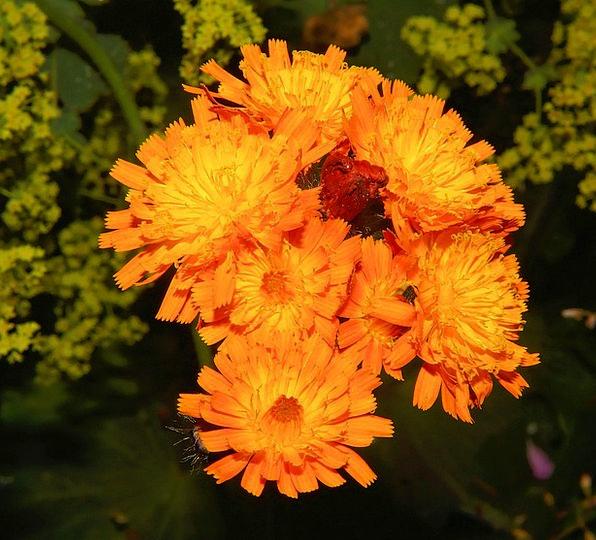 Flowers Plants Near Orange Carroty Close Colorful