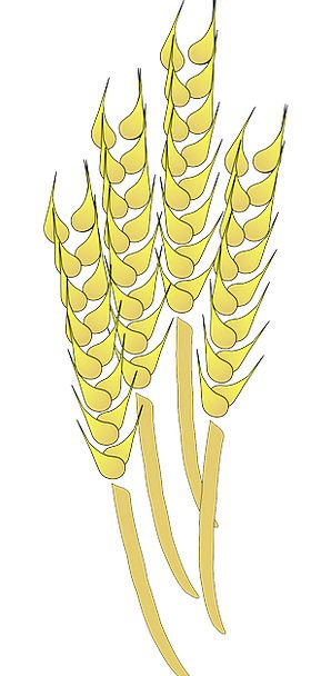 Wheat Drink Ounces Food Harvesting Reaping Grains