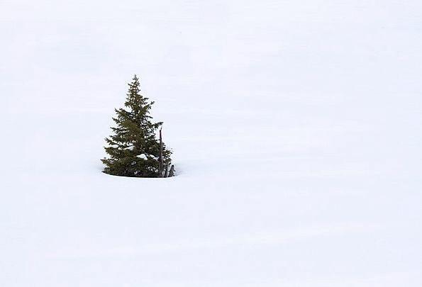 Branch Division Cold Emotionless Christmas Snow De