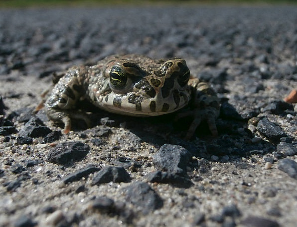 Frog Close Macro Instruction Nearby Animal Physica