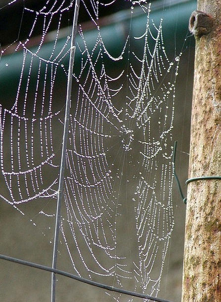 Morning A.m. Mesh Dew Precipitation Web Compositio