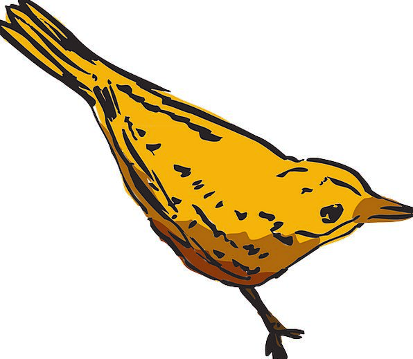 Yellow Creamy Fowl Wings Annexes Bird Curious Inqu
