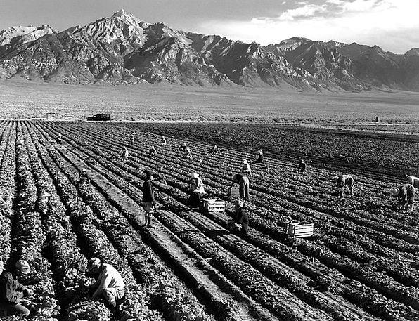 Fieldwork Research Crop Mount Williamson Harvest A
