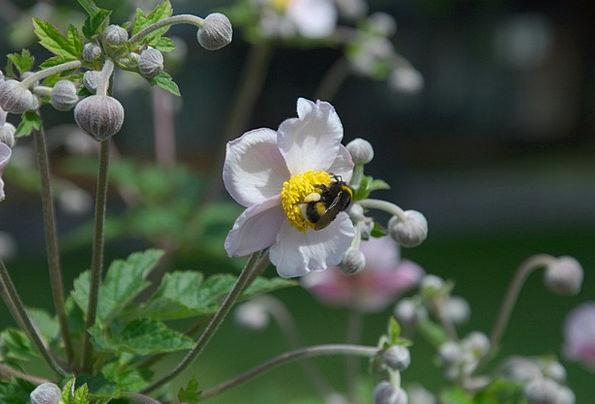 Flower Floret Elaborate Insect Bug Purple Hummel