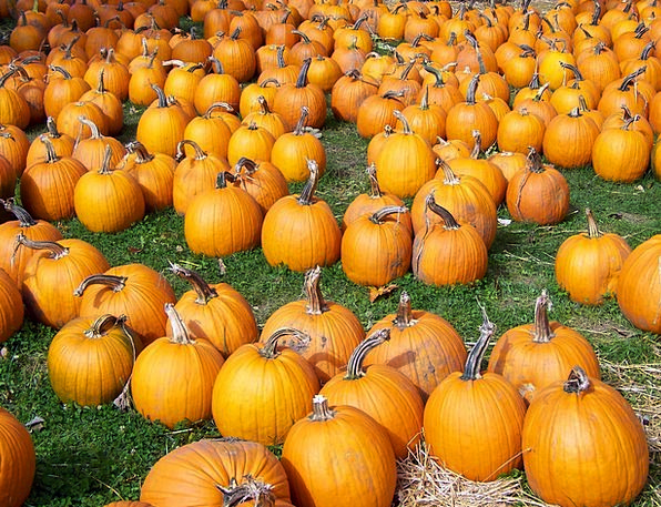 Pumpkins Drink Food Fall Reduction Autumn Floor Or