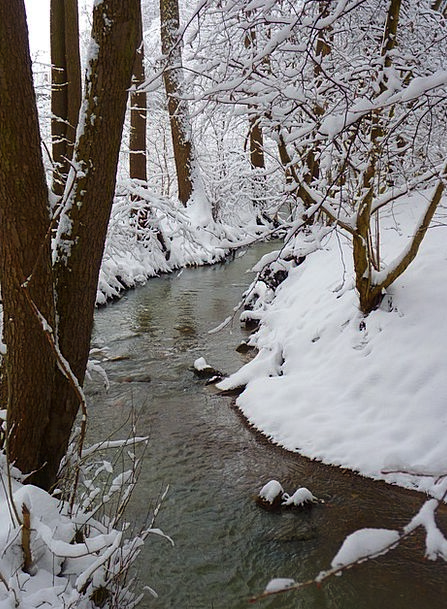 Bach Aquatic Waters Liquids Water Wintry Chilly Wi
