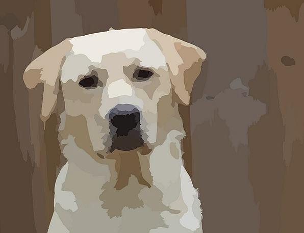 Dog Brat Animal Physical Puppy Pedigreed Canine Do