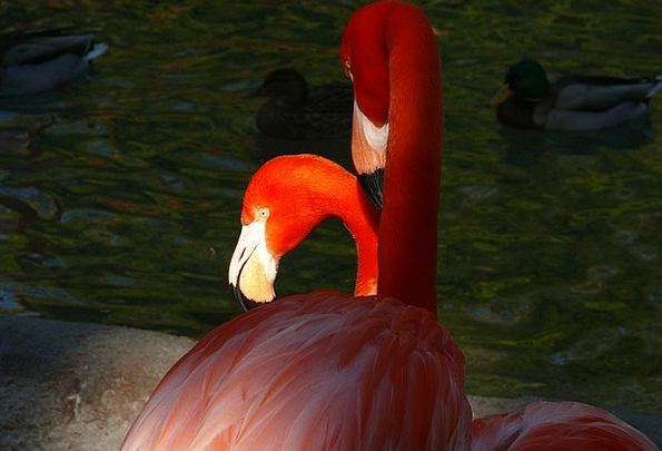 Zoo Menagerie Animals Faunae San Diego Bird Fowl F