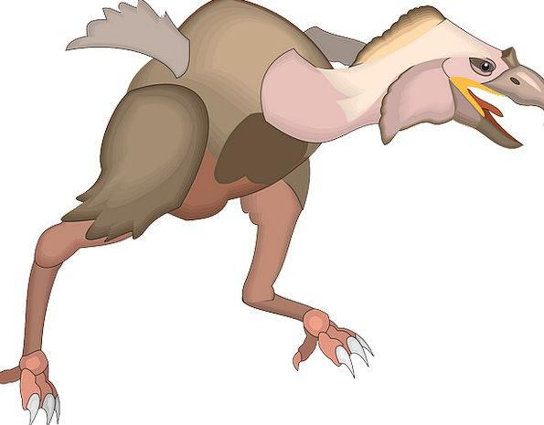 Bird Fowl Annex Running Consecutively Wing Animal