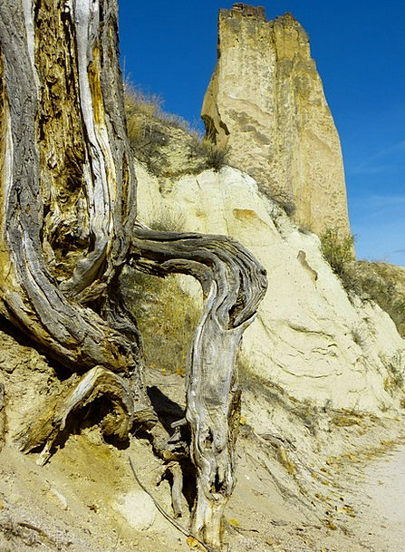 Rock Pillar Origin Tree Sapling Root Old Ancient T