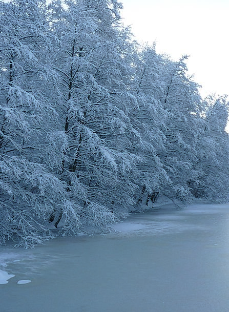 Winter Season Plants See Understand Trees Ice Fros