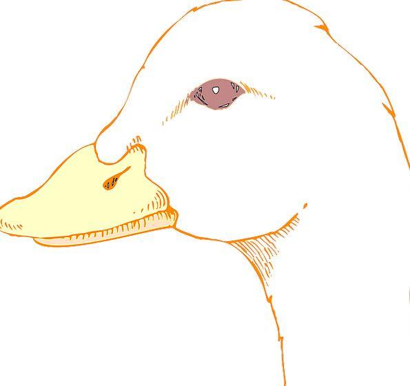 Head Skull Judgments Bird Fowl Eyes Duck Stoop Bea