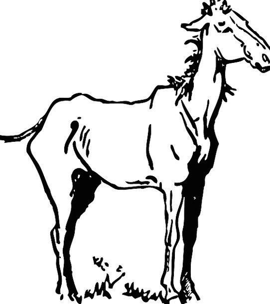 Horse Mount Reedy Skinny Thin Free Vector Graphics