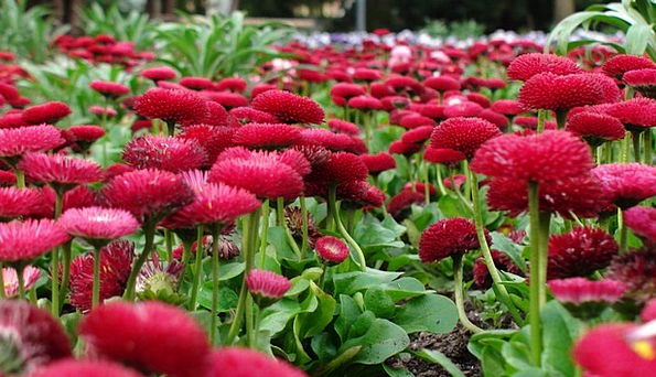 Flowers Plants Greeneries Flower Bed Greens Red Bl