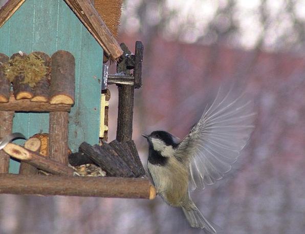 Tit Bird Fowl Bird Seed Animals Faunae