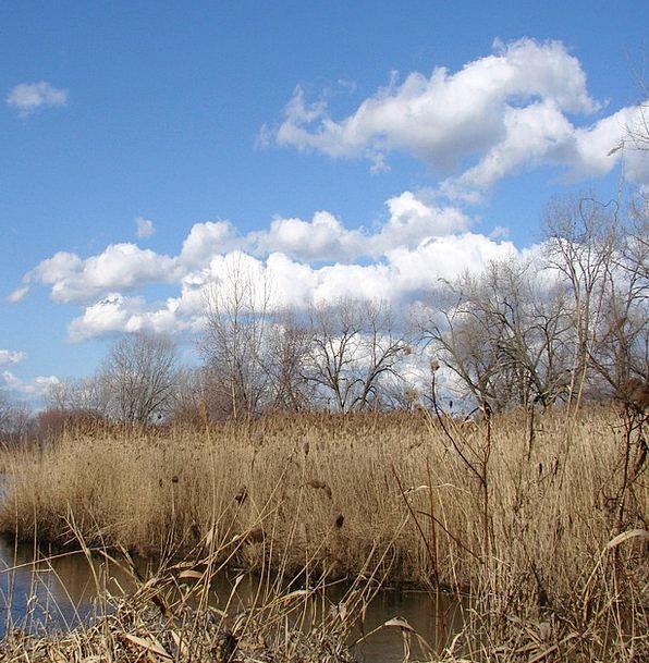 Wetlands Swamps Landscapes Nature Water Aquatic Ta