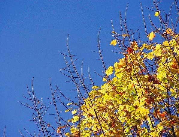 Tree Sapling Landscapes Fall Nature Colors Insigni