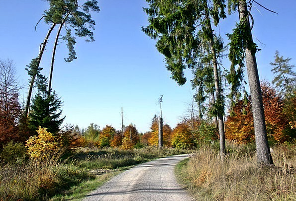 Forest Woodland Landscapes Nature Nature Park Fore