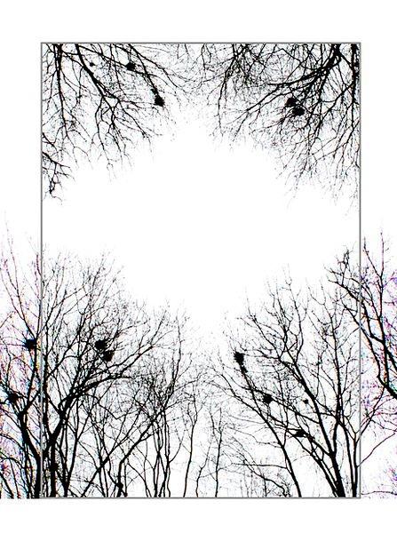 Branch Division Landscapes Plants Nature Landscape