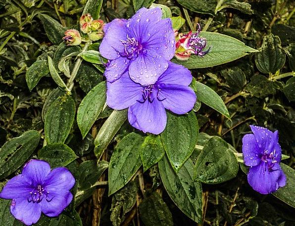 Flower Floret Landscapes Mauve Nature Plant Vegeta